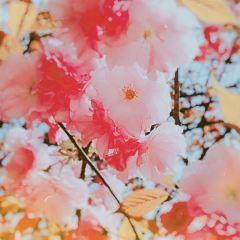 Nanshan Botanical Garden User Photo