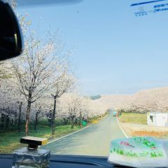 平壩農場櫻花園用戶圖片