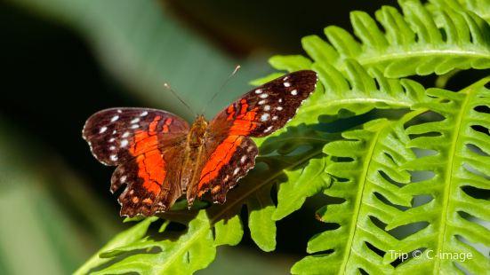 克萊爾蝴蝶中心
