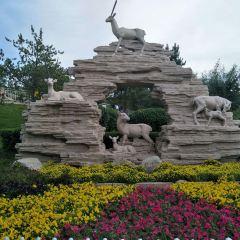 青藏高原野生動物園用戶圖片