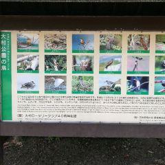 大村公園用戶圖片