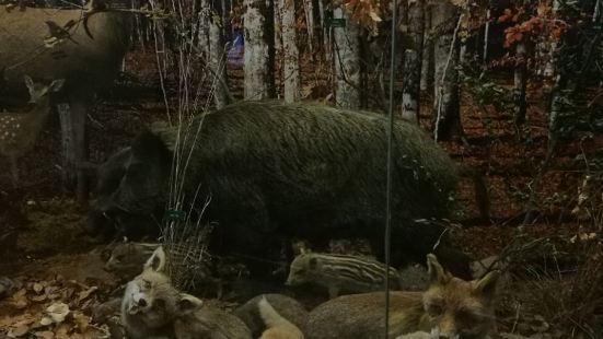 克萊蒙費朗自然歷史博物館