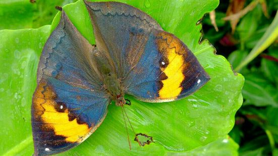 Colorful Butterfly Garden