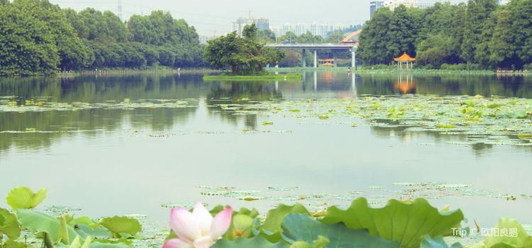 Honghu Park3