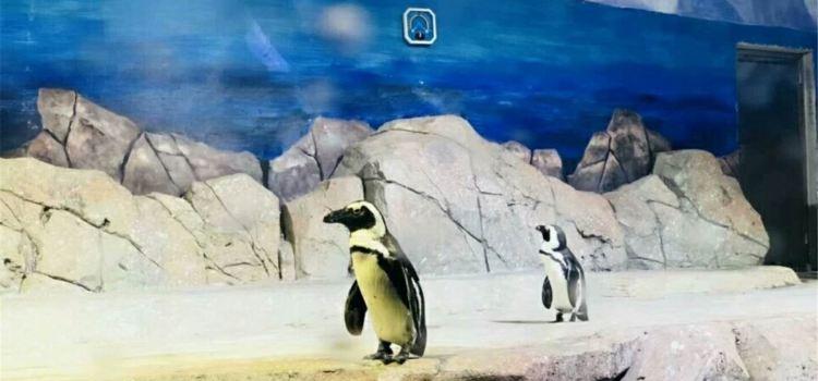 Linyi Polar Ocean World1