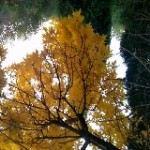 Baoding Botanical Garden3