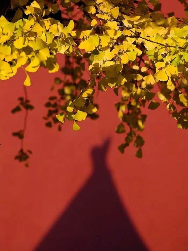 再過2周,這裡的秋色將承包國內90%的美!