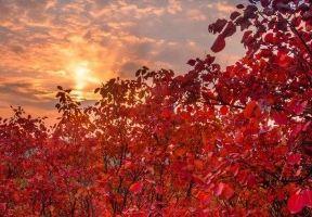 萬頃如火紅葉,這裡是北方最佳賞秋去處之一,現在出發剛剛好