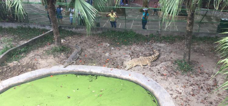Davao Crocodile Park1
