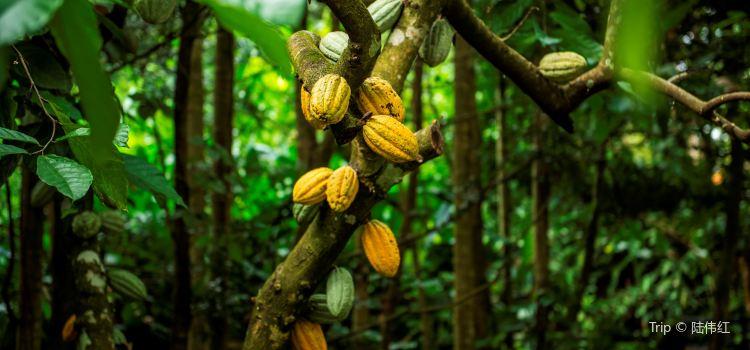 興隆熱帶植物園2