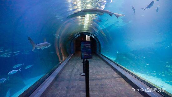 冒險水族館