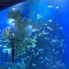 Kunming Huadu Ocean World User Photo