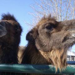法蘭克福動物園用戶圖片