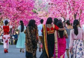 理大校園,燦爛的不止櫻花