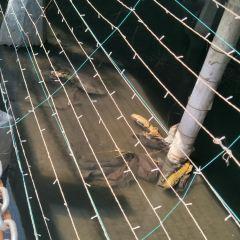 羅莊寶泉寺公園用戶圖片