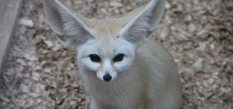 耳廓狐展區2
