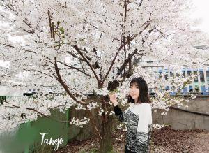 Seoul,springholiday
