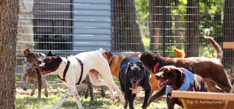 Dog House Drinkery & Dog Park2