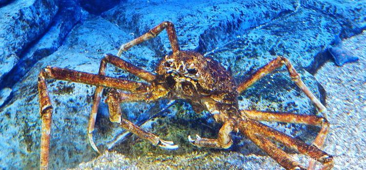 Birch Aquarium at Scripps3