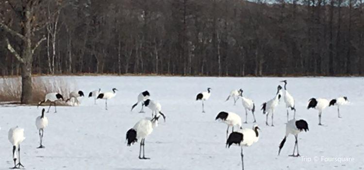 Tsurui Ito Red-crowned Crane Sanctuary