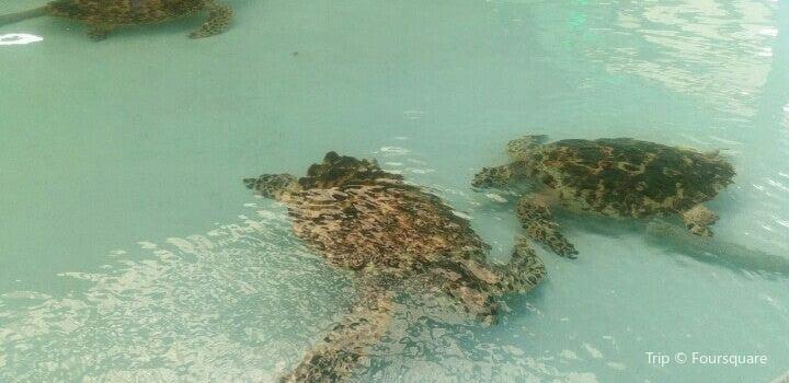 Old Hegg Turtle Sanctuary2