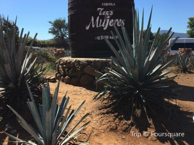 Tequila Tres Mujeres