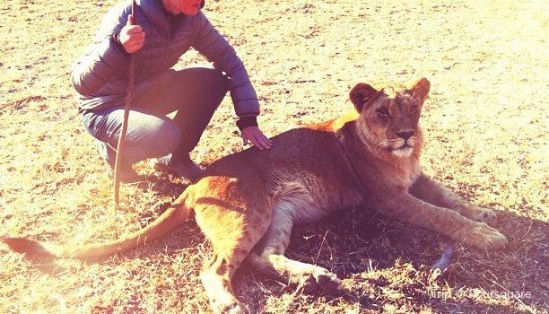 Lion Encounter Zimbabwe2
