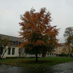 Bauhaus-Universitat User Photo