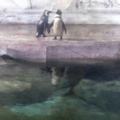臨沂極地海洋世界用戶圖片