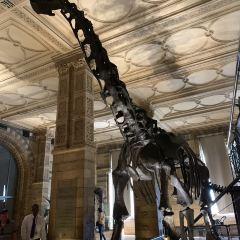 대영박물관 여행 사진