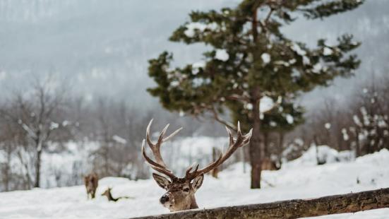 Ranch Deer Valley