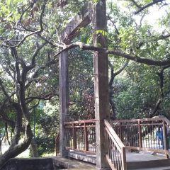 Shangyong Fruit Tree Park User Photo