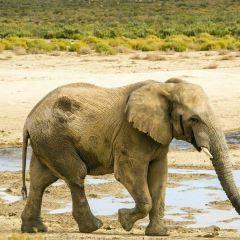 Zulu Safaris User Photo