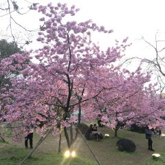 East Lake Cherry Blossom Garden User Photo