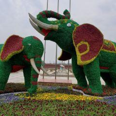 Wuhan Zoo User Photo