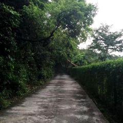 Wutong Mountain User Photo