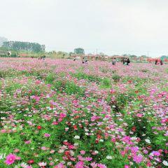 Huaqian Gesanghua World User Photo
