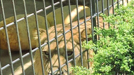 후쿠오카시 동물원