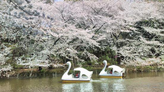 이노카시라 공원