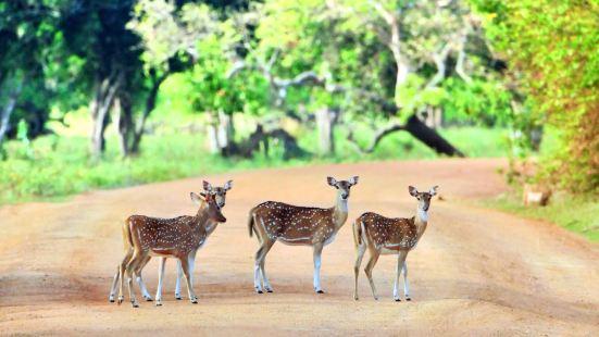 얄라 국립공원