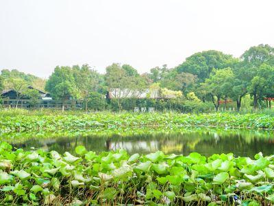 Binjiang Fortress