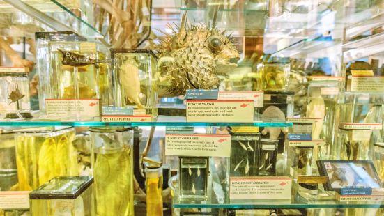 동물학 박물관
