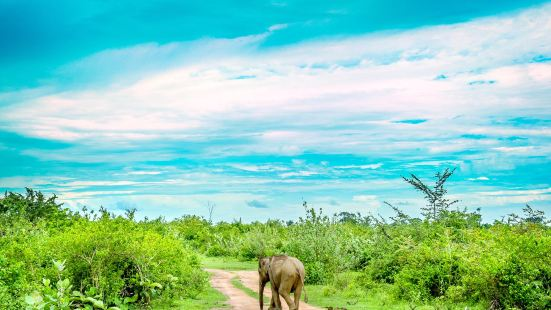 烏達瓦勒韋國家公園