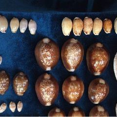 Sea Shell Collection by Argonauta Boracay User Photo