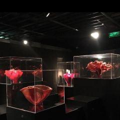 Liuli China Museum User Photo