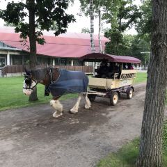 Northern Horse Park User Photo