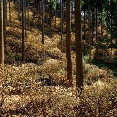 京都府立植物園用戶圖片
