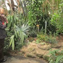 Bloedel Conservatory User Photo
