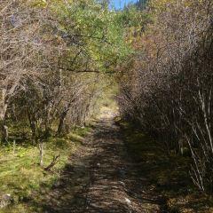 雅克夏森林公園用戶圖片