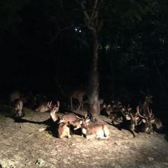 Chiang Mai Botanical Garden User Photo